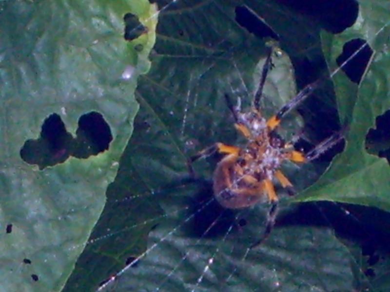 Royaume d'arachnides