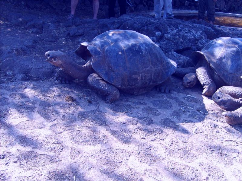 Programme de protection des tortues