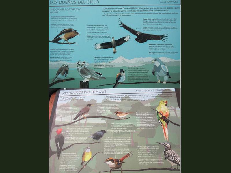 Fiches d'identifications d'oiseaux