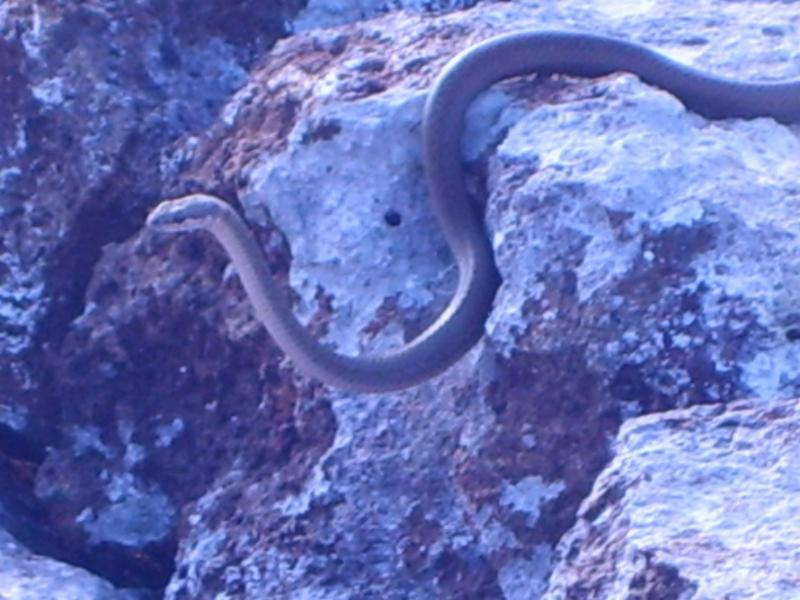 Serpent des Galapagos