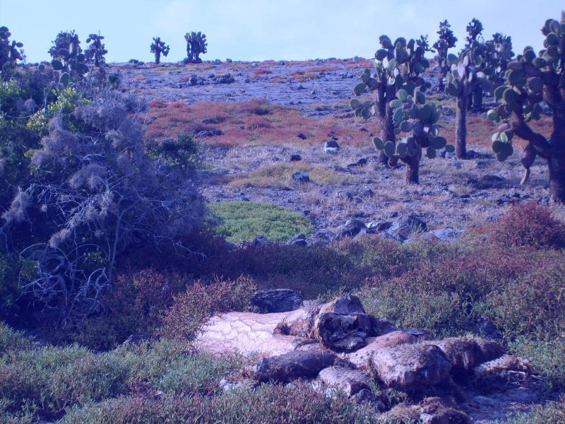 Île de Santa Fé