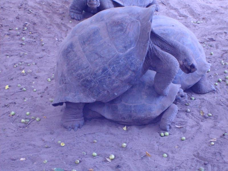 Reproduction de tortues