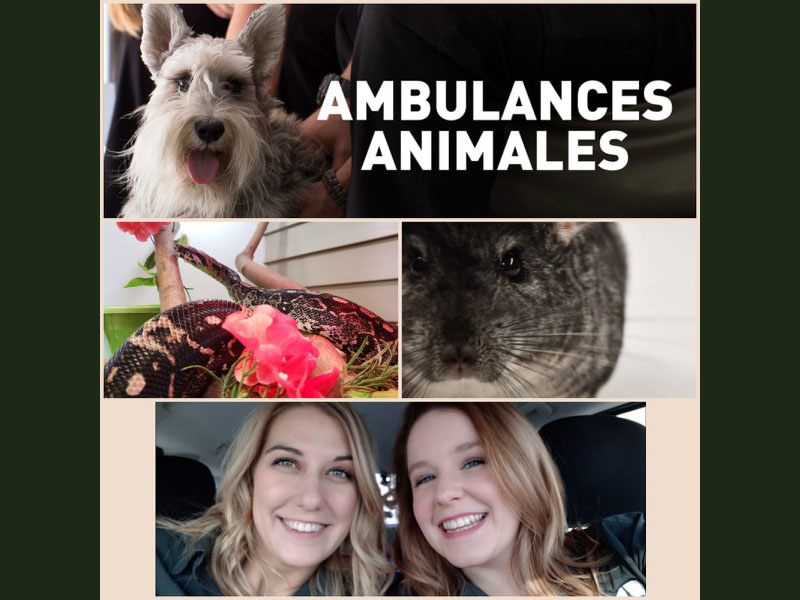 Ambulance animale