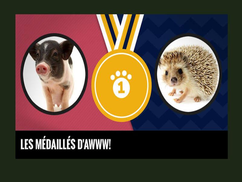 Les médaillés d'awww! - Vrak Tv